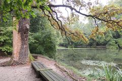 一个森林湖的全景从一条长凳的在岸 库存图片
