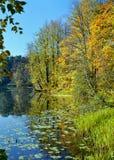 一个森林湖的岸在秋天晴天 免版税库存照片