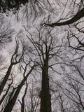 一个森林的分支在冬天 库存图片