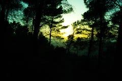一个森林的剪影有树的在春天日落 库存照片