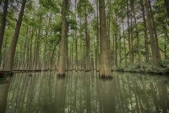 一个森林的机盖水的 免版税图库摄影