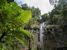 一个森林的美好的风景视图有好的树和瀑布的 库存照片