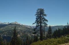一个森林的美妙的看法从最高的部分的其中一座优胜美地国家公园山  自然旅行假日 免版税库存照片