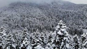 一个森林的鸟瞰图在一冬天阴天 云杉的美好的冬天在雪的本质和杉木 低飞行 股票视频