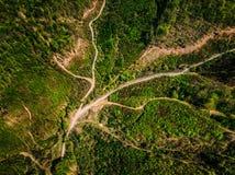 一个森林的鸟瞰图有土路的 免版税库存照片