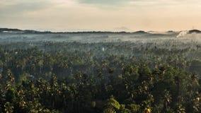 一个森林的Timelapse在斯里兰卡 4k英尺长度 股票录像