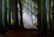 一个森林 免版税库存照片