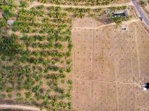 一个椰子农场的鸟瞰图有一半的它的树裁减了由于导致重的天旱的恶劣的雨秋天 免版税图库摄影