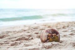 一个椰子的特写镜头图象在海滩的 库存图片