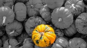 一个橙色南瓜 免版税库存照片