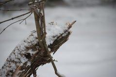 一个死的积雪的分支的特写镜头 免版税库存图片