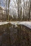 一个水坑在森林里 免版税库存照片