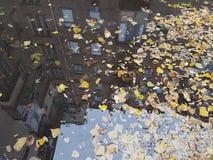 一个水坑,水黄色秋叶的表面上浮动,并且许多地板在与风的一个城市大厦被反射 库存图片