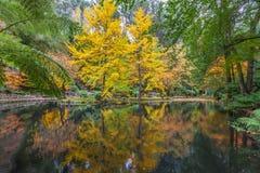 一个池塘和树的平静的设置在秋天 免版税库存图片