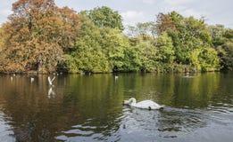 一个池塘在公园 免版税库存图片