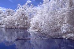 一个池塘在森林-红外风景 库存图片