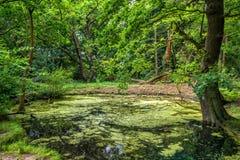 一个池塘在森林 免版税图库摄影