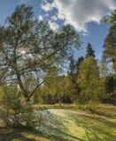 一个池塘在用绿色软泥盖的森林里 库存照片