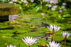 一个池塘在碧瑶 图库摄影
