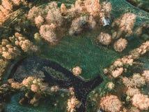 一个池塘的寄生虫摄影在议院后的包围与Bea 免版税库存照片