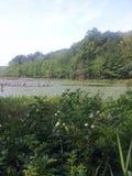 一个池塘的看法通过灌木 免版税库存图片