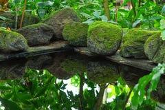 一个池塘 池塘在后院 庭院场面 免版税图库摄影