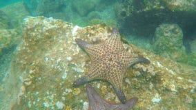 一个海星的水下的射击在一块岩石礁石的在isla bartolome在加拉帕戈斯 影视素材