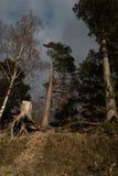 一个海滩的小野餐地方在小山的一个森林里与一个圆的bbq格栅和树桩 免版税库存图片