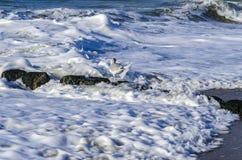 一个海鸥在水中 库存图片