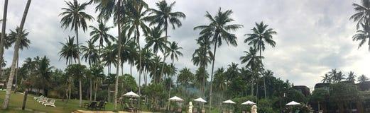 一个海滩的伞和轻便马车休息室在棕榈下 巴厘岛 免版税库存图片