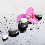 一个温泉,兰花花的背景与石头的 库存图片