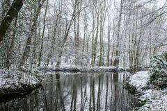 一个湖在一个森林里在冬天 免版税库存照片