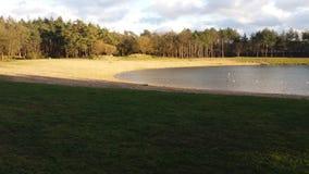 一个湖在森林里Nunspeet 免版税图库摄影