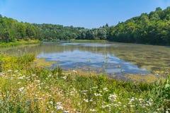 一个湖在高绿色树和开花的草甸包围的森林里 罕见人们的一个处女干净的地方 库存照片