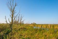 一个湖的岸在阳光下在秋天 免版税库存照片