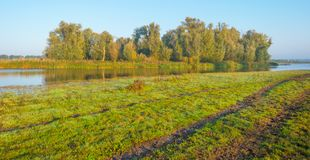 一个湖的岸在阳光下在秋天 免版税库存图片