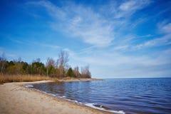 一个湖的岸有干燥芦苇的 图库摄影