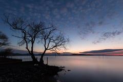 一个湖的美丽的景色黄昏的,与在前景的一棵树, 库存图片