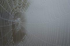 一个湿蜘蛛网的侧视图在一个黑暗,有雾的湖的 库存图片