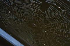 一个湿蜘蛛网的顶视图在一个黑暗,有雾的湖的 免版税库存照片