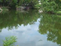 一个潮汐水池等候更多冲的水 免版税库存图片
