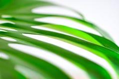 一个热带植物特写镜头的大绿色叶子 免版税图库摄影