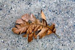 一个热带植物的干叶子在石背景说谎 免版税库存照片