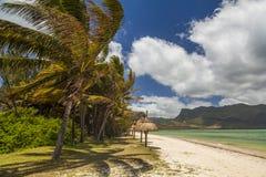 一个热带海岛的岸有棕榈树和白色沙子的 图库摄影