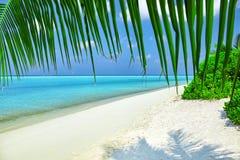 一个热带海岛的海岸线 库存图片