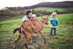 一个父亲和他的小孩孩子有一只山羊的外面在春天自然 免版税库存照片