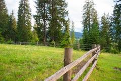一个牧场地在森林里 免版税库存照片