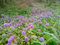 一个狂放的领域,与一朵紫色花 免版税图库摄影
