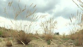 一个独特的群落生境社区的区域开放含沙沙子的在Pannonian低地的北边缘有一定数量的 影视素材