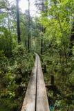 一个狭窄的人行桥通过森林 免版税库存图片